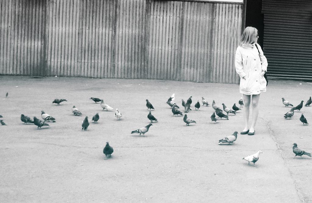 Площада на свободата Square_pigeons_by_Lemonshortcake
