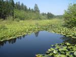 Washington Lake