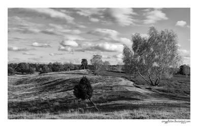 .: heathland :. by amygdalon