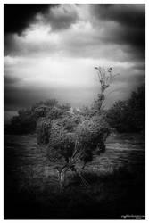 .: encounter (at) heathland :. by amygdalon
