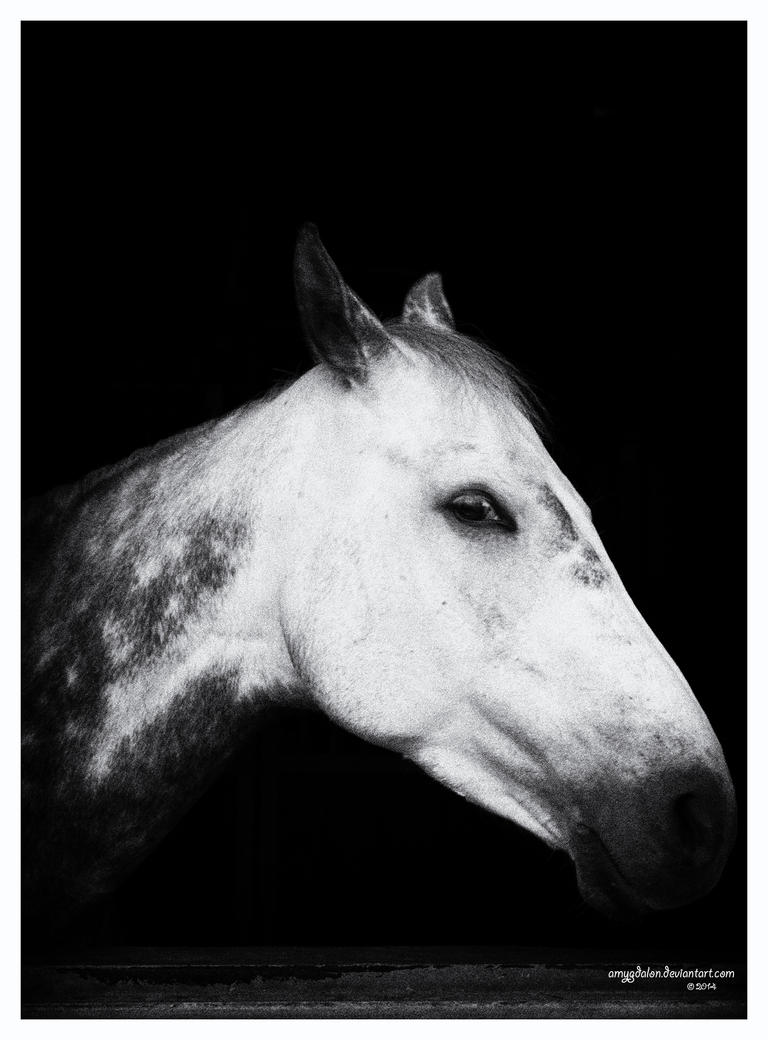 .: just another portrait :. by amygdalon