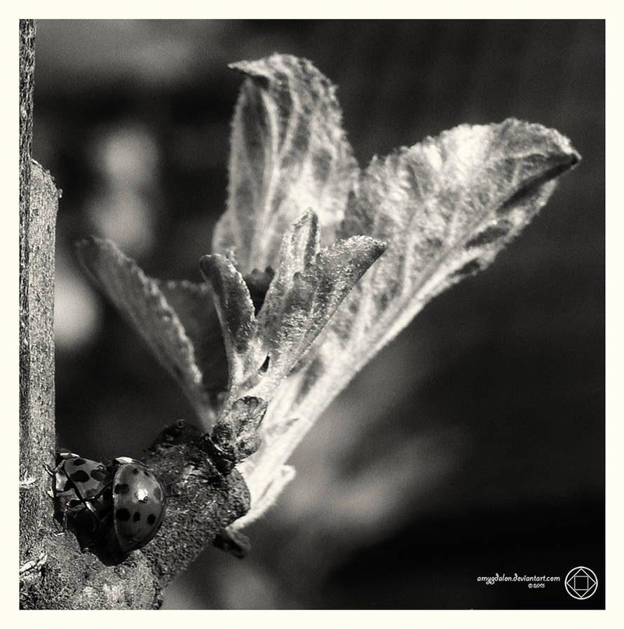 .: Next? Spring! :. by amygdalon