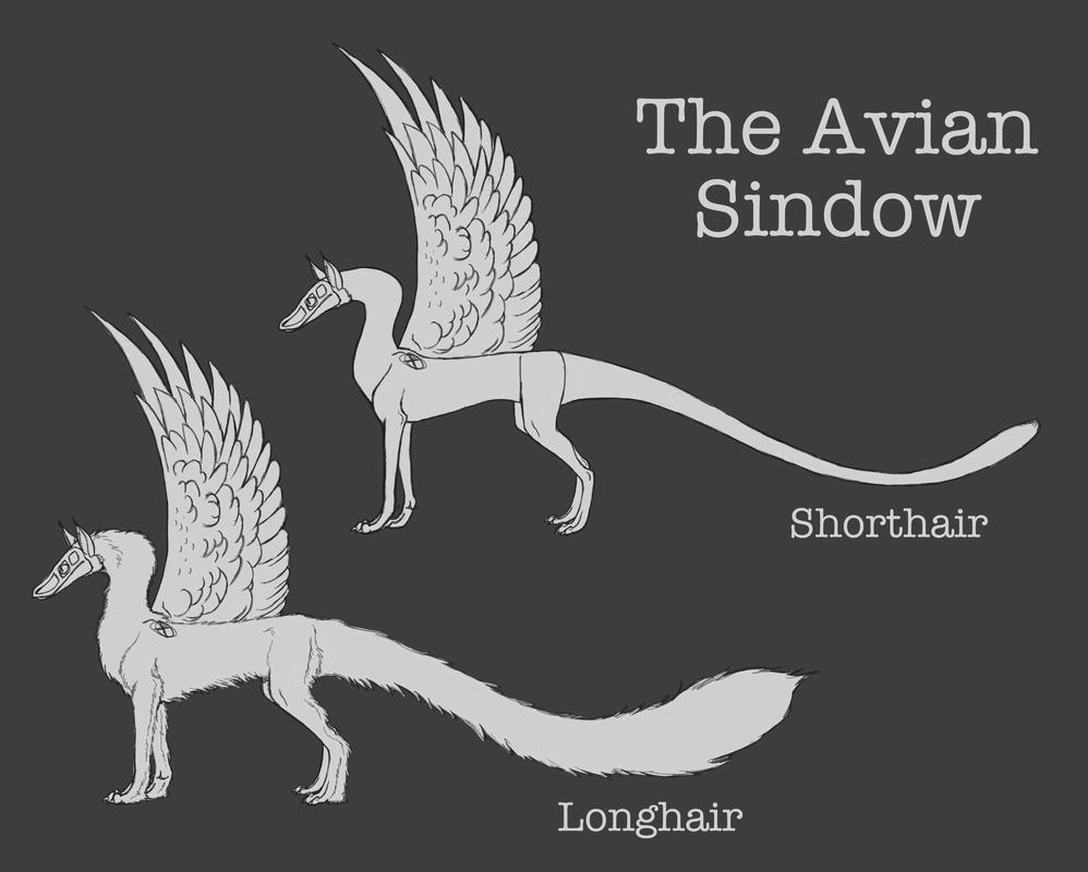 The Avian Sindow by ReapersMenagerie