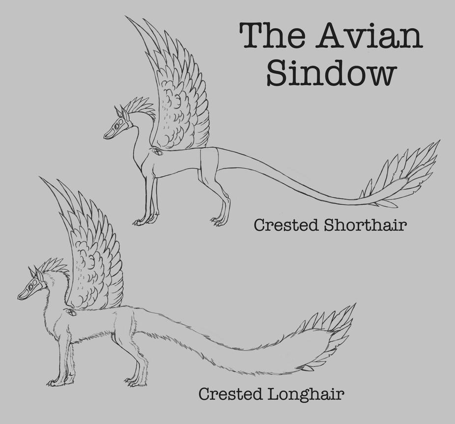 The Avian Sindow: Crested by ReapersMenagerie