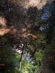 woods water mirror (Veluwe)