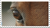 Horse eye stamp by Shandyhorse
