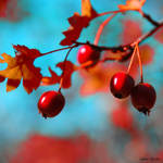 Autumn's Fruits by unknown-dark