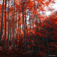 Autumn in the Forest of Dreams by unknown-dark