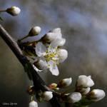 spring symphony part II