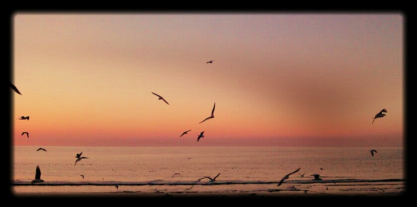 seagulls in blackpool by noonfeather