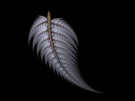 Apophysis Silver Frost Fern