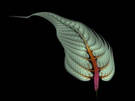 Apophysis Spring Fern Frond