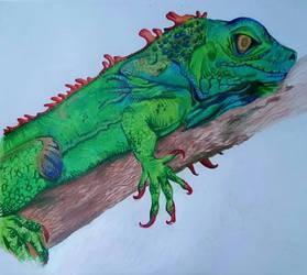 The Iguana by kvnsanders