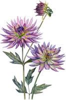 flower by MoraShadow
