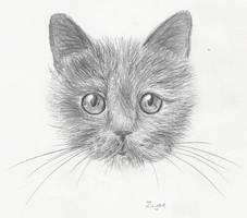 Kitten With Staring Eyes by TSB-Studios