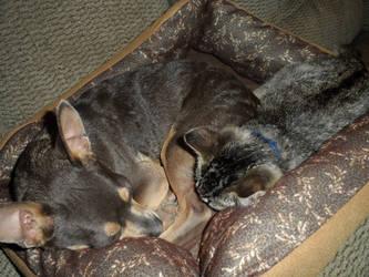 Sleepy Babies by melaphyre