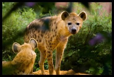 hyena by chrizzz6