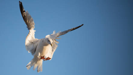 king of the sky by chrizzz6