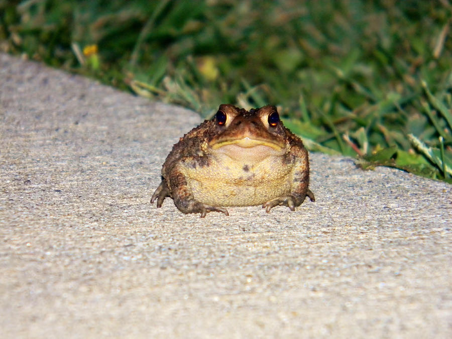 Sidewalk Toad by EndOfGreatness