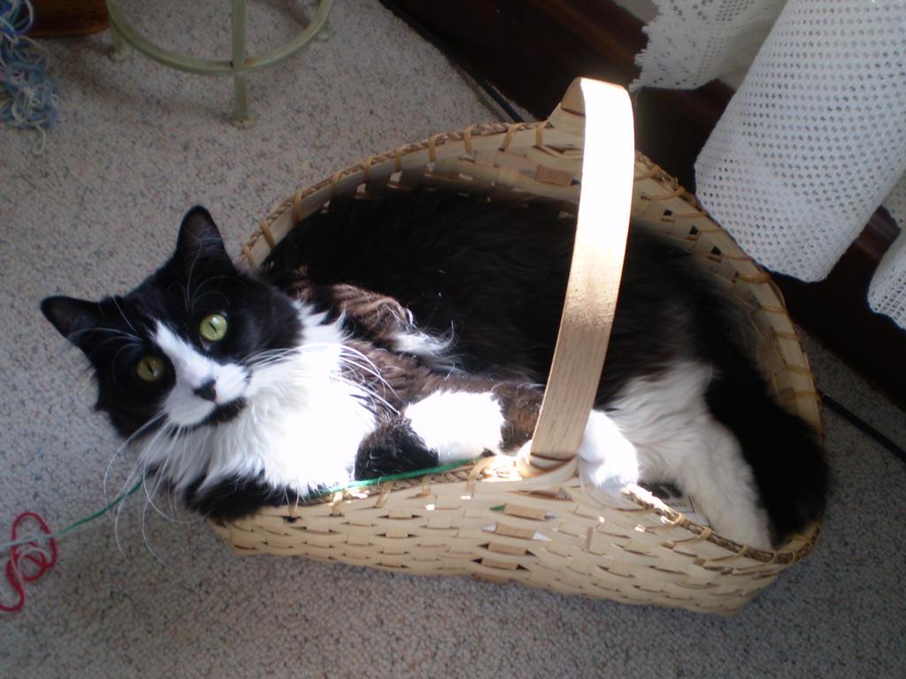 Cat in basket by Oceanfairydust
