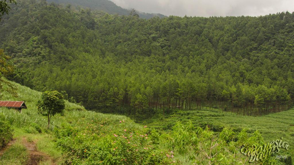 Mountain Kawi by Ngoeg