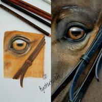 realistic horse's eye
