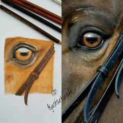realistic horse's eye by justartcraft