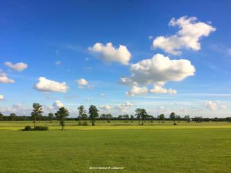 Dutch summer fields
