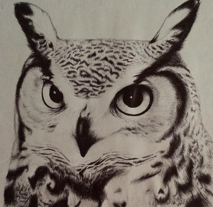 Great horned owl head drawing