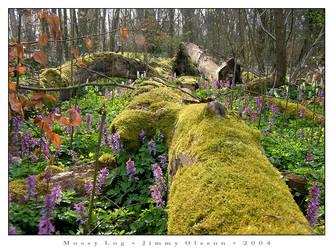 Mossy Log by J-i-m-p-a