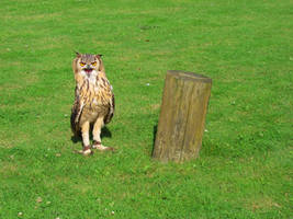 Owl 1 by JohnnySix