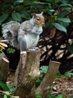 Seattle Squirrel by JohnnySix