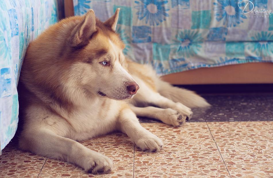 My dog ID by Unilight