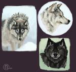 Wolf Studies