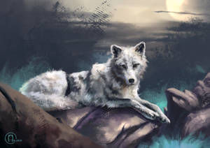 International Wolf Day