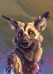 Day 1 - African WIld Dog