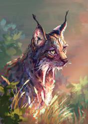 Day 3 - Iberian Lynx