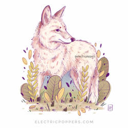 Wolf in fox colors
