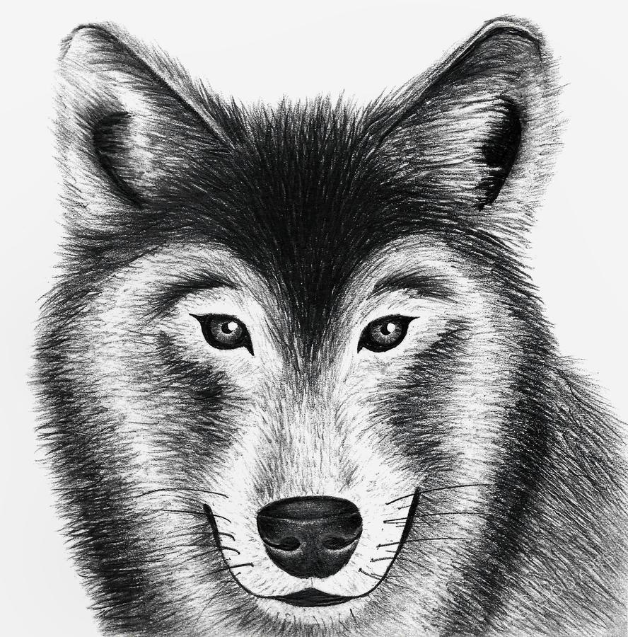 Wolf by starwarstory