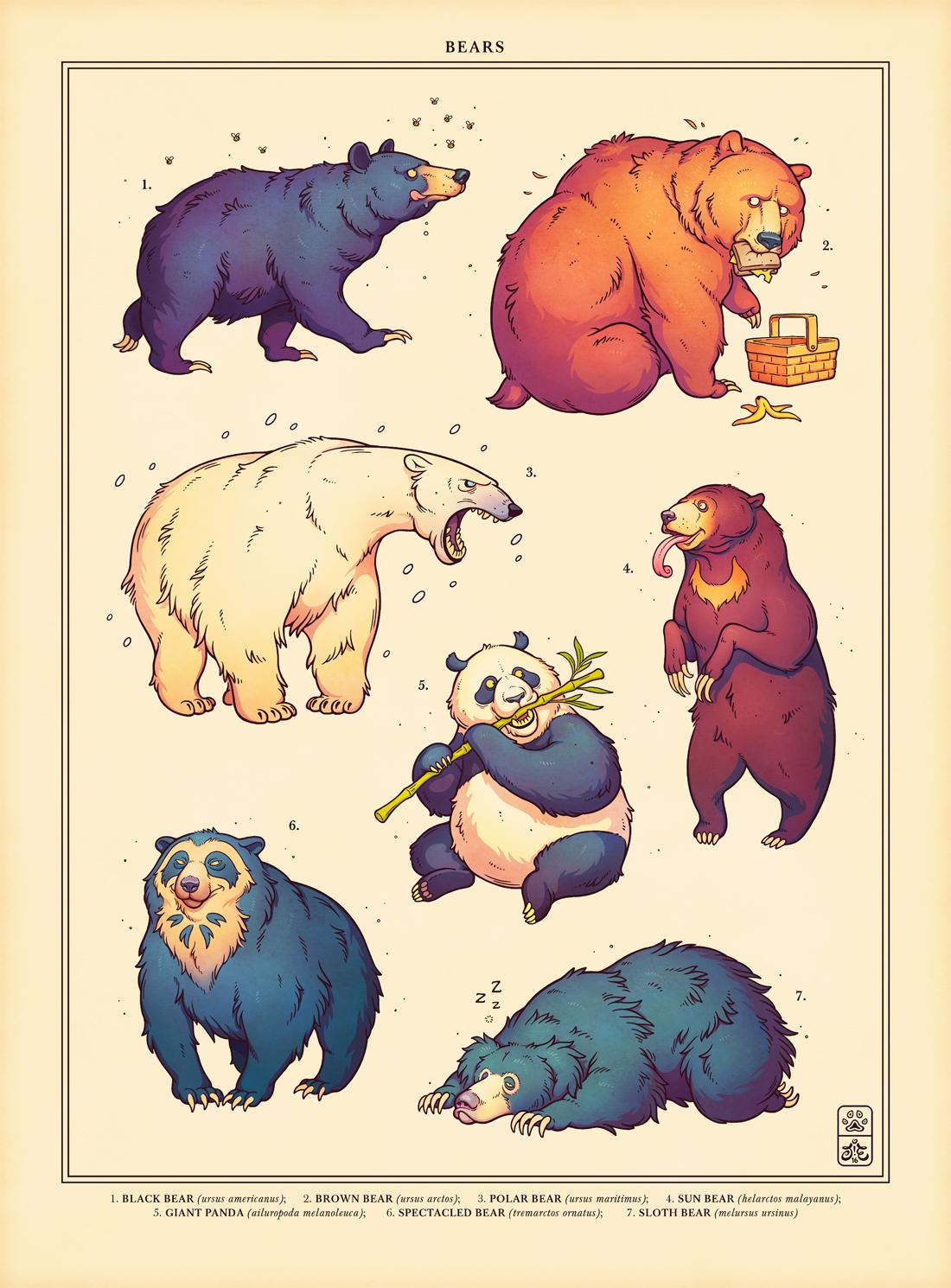 Bear Week by einen