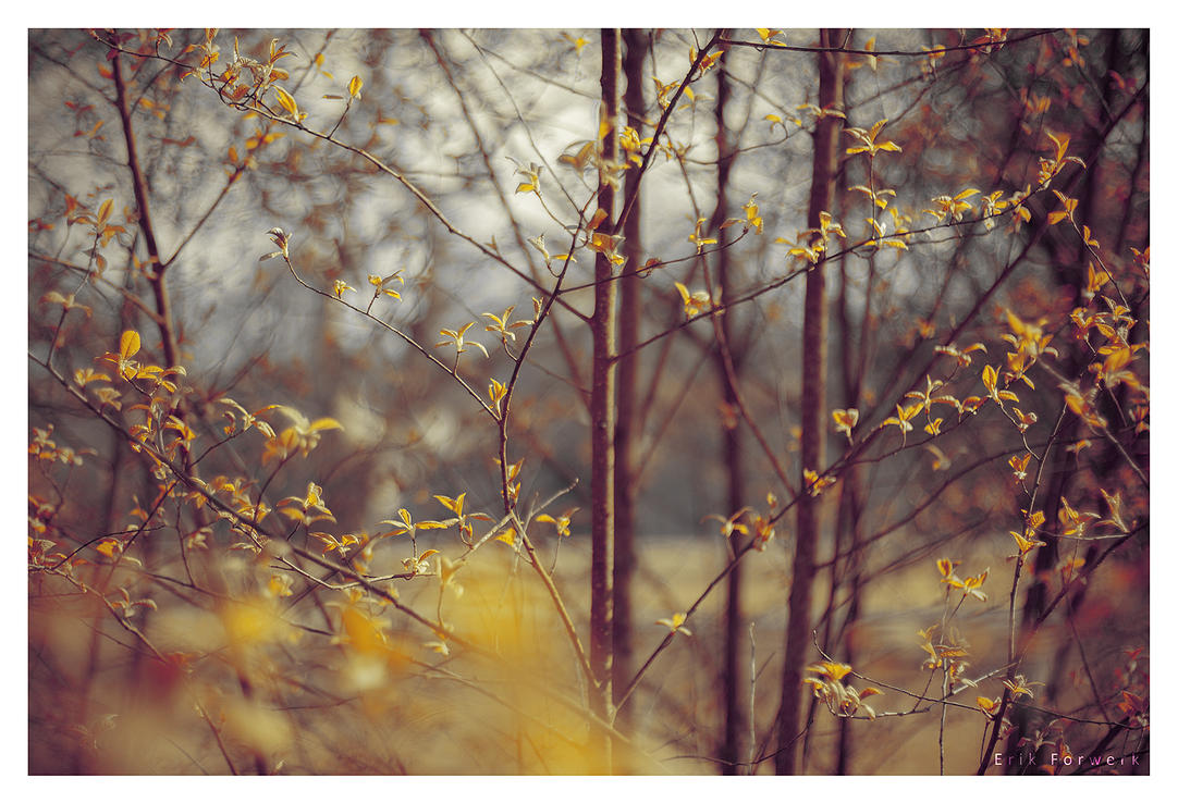 Spring by 3rik