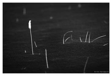 lonliness by 3rik