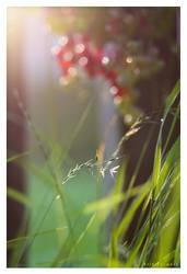 Garden Paradies by 3rik