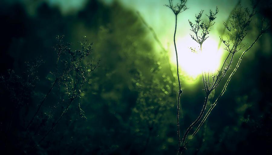 Winter's sun - HD wallpaper by JanneO