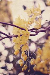 yellow by hopesdream