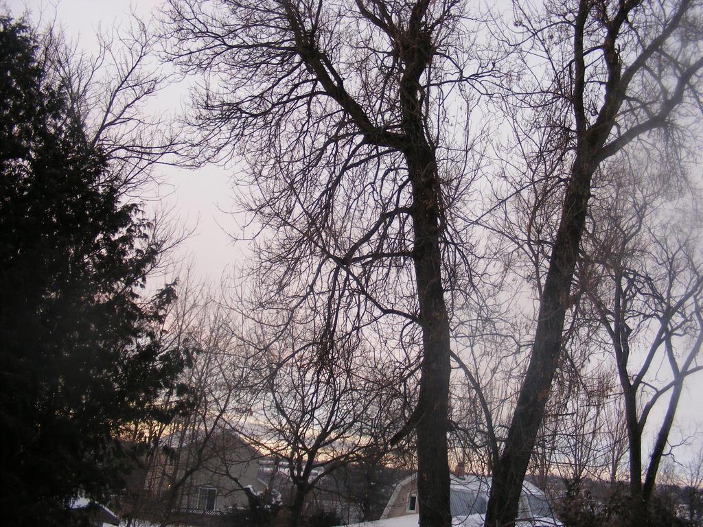 jan 8th morning sky by BlueIvyViolet