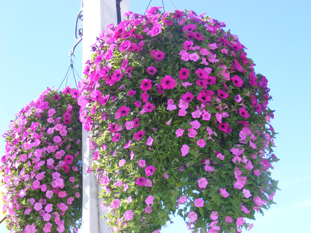 Beautiful Hanging Flowers By Blueivyviolet On Deviantart
