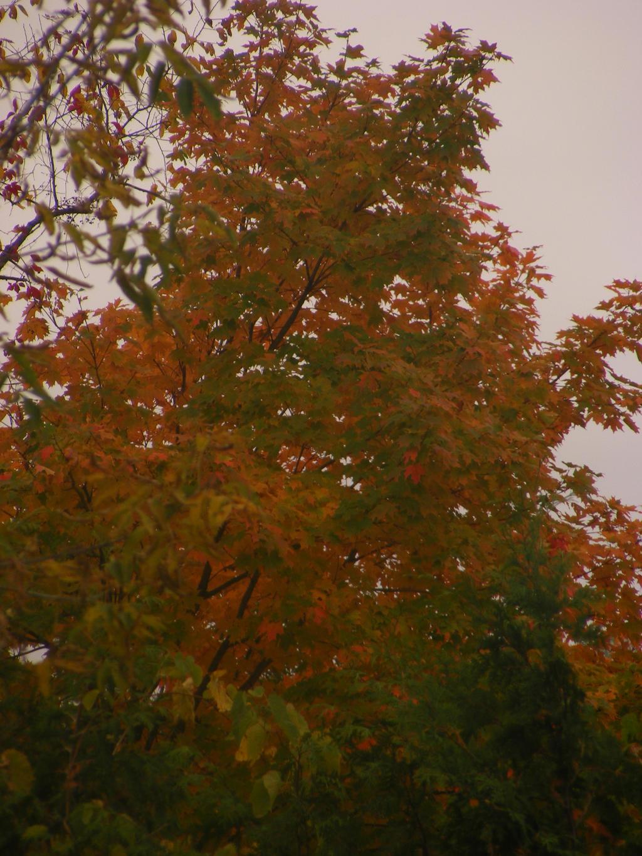 backyard fall pic by BlueIvyViolet