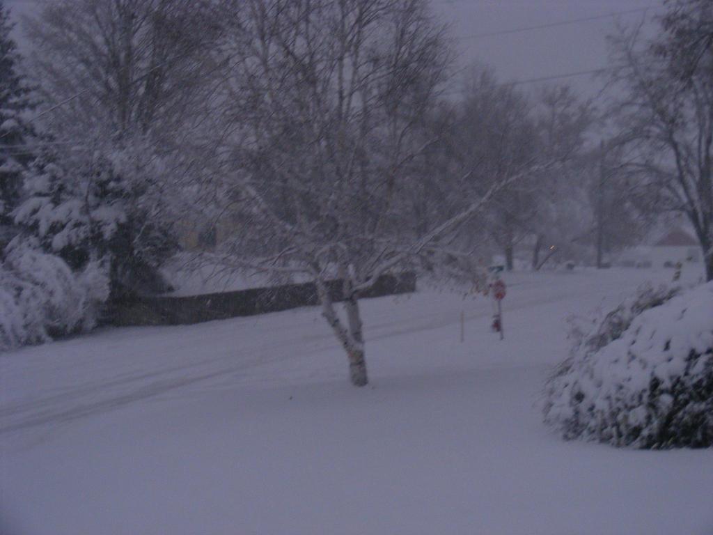 nov 2nd winter storm (2014) by BlueIvyViolet
