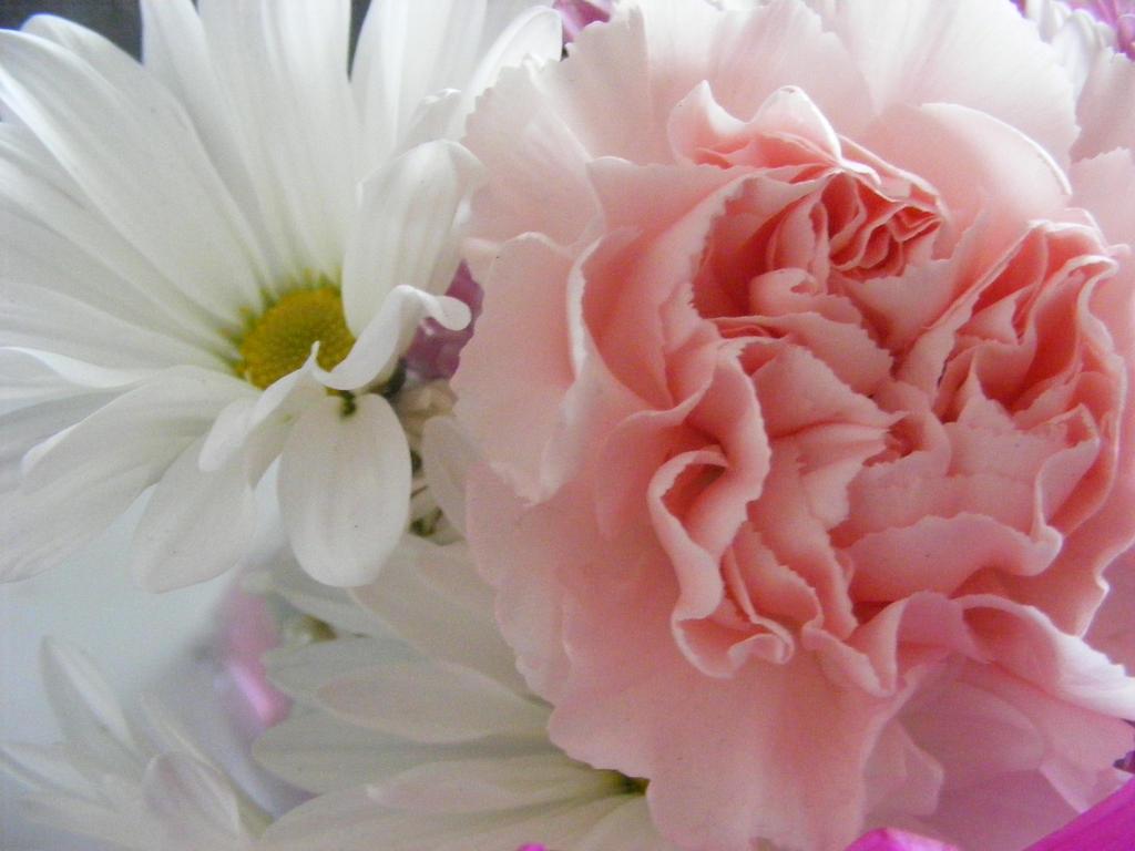 beautiful flowers by BlueIvyViolet
